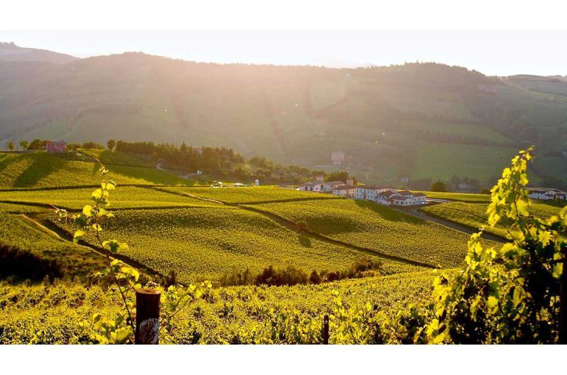 Weinliebhaber aufgepasst! Exklusive Weinreise mit den besten Weinen der Emilia Romagna