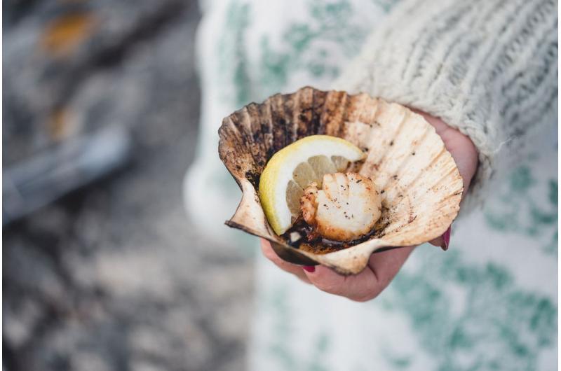 Malerische Privat-Insel in den Fjorden: Genussreise für Liebhaber vom Meer und Meeresfrüchten in Norwegen